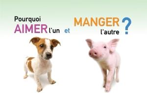Campagne publicitaire de l'Association végétarienne de Montréal et de Mercy for Animals Canada.