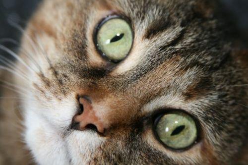 Mymosa et ses yeux