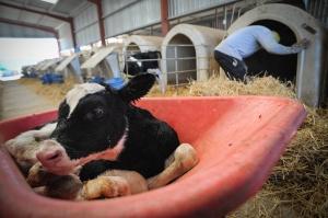 Cliquez sur l'image pour voir d'autres aperçus de l'industrie laitière.