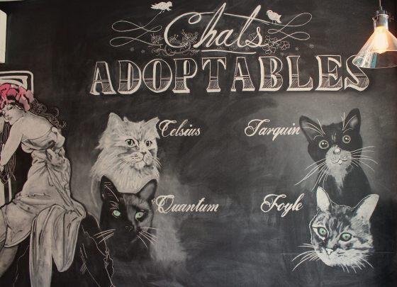 Murale présentant les chats adoptables (en juin — il y a eu un peu de roulement depuis!).