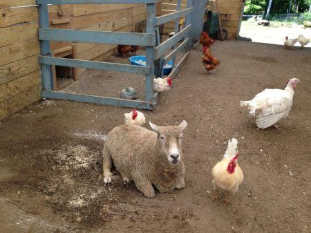 Une photo que j'ai prise lors de ma visite à VINE: l'on voit des membres de plusieurs espèces cohabiter.