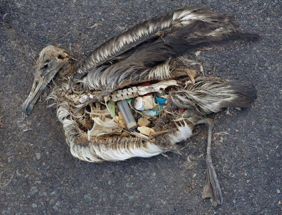 La gestion de déchets n'est qu'une conséquence parmi d'autres que notre mode de vie entraîne sur les animaux.