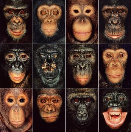 animal-politicsafb-voor-pag-56